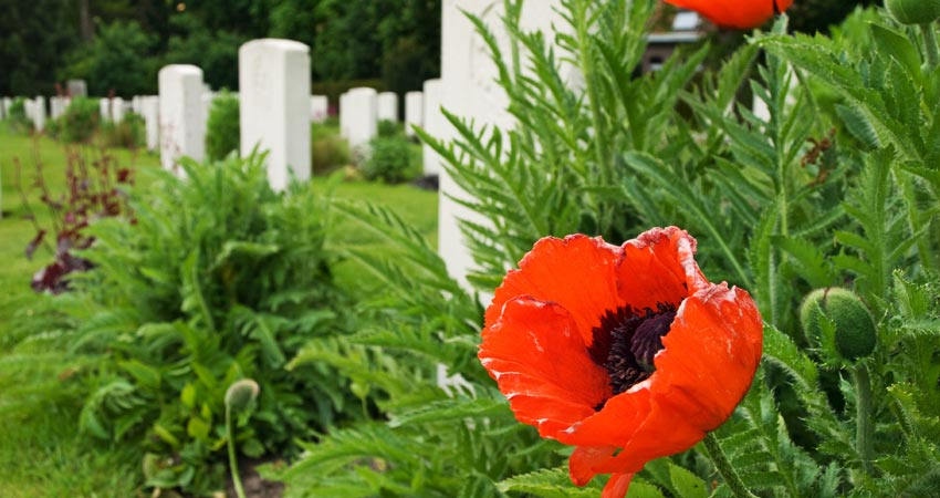 I-GTI-Tour-Image-WW1-Poppies (1)