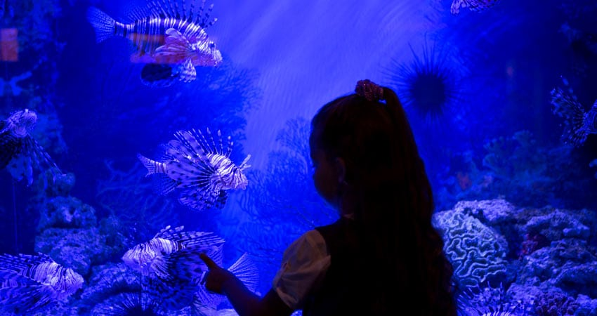 c-GTI-School-Tour-Aquarium